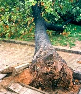 Ruiz Cazón condenado a plantar 3 millones de árboles, uno por cada libro vendido